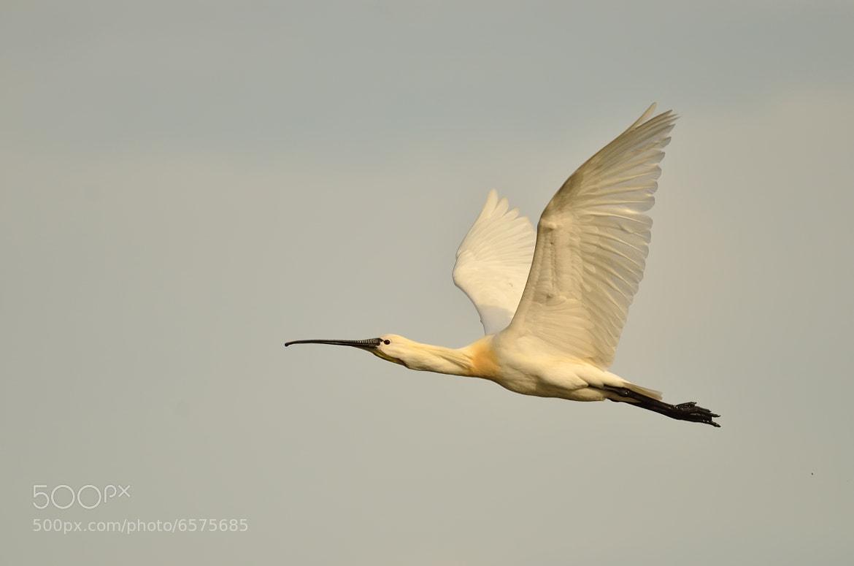 Photograph Like an Arrow by Csilla Zelko on 500px