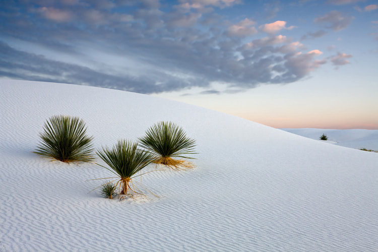 Photograph White Sands NM by Cecil  Whitt on 500px