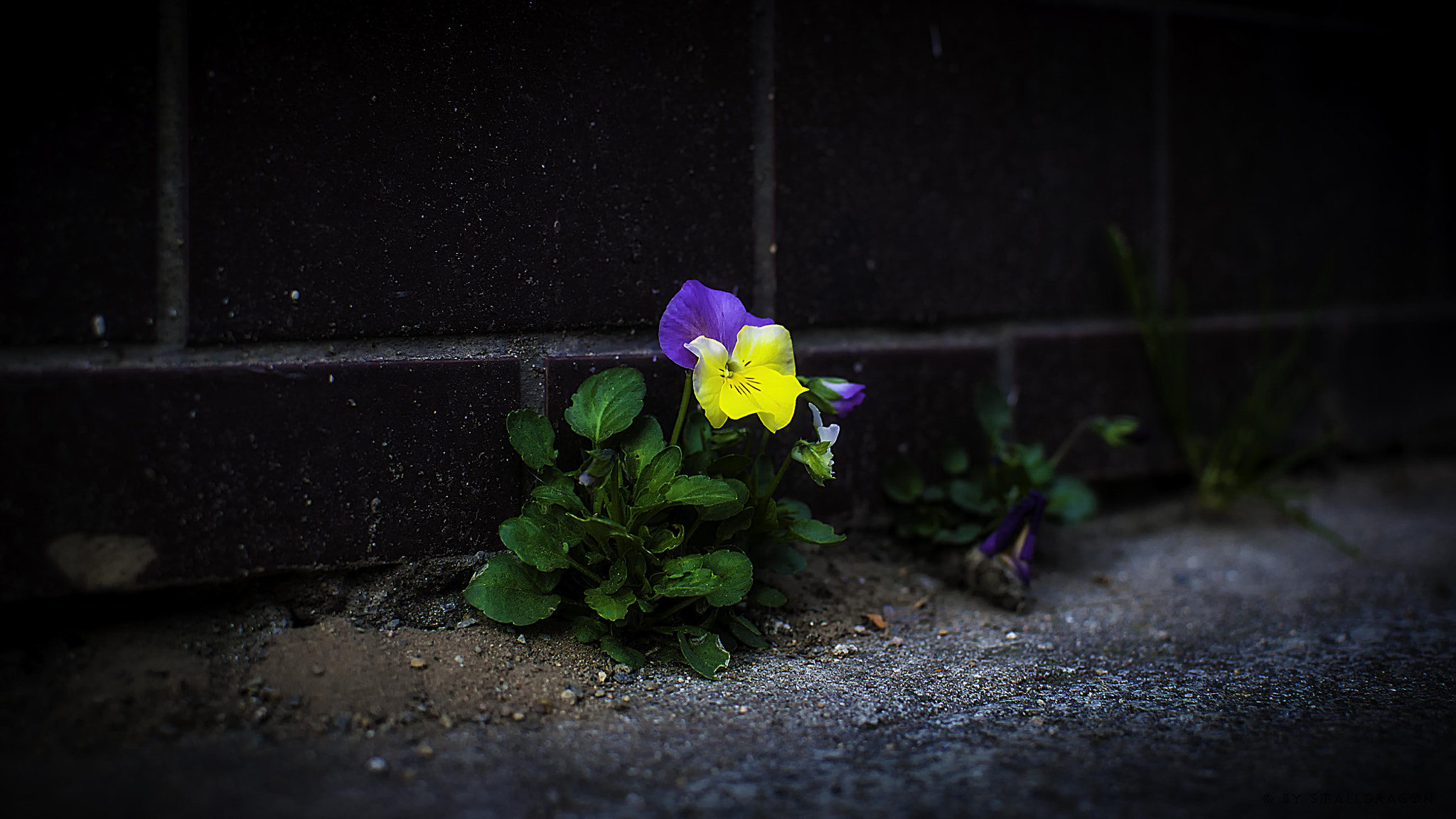 Photograph Flowers on the Wall 02 by Sven Reitis on 500px