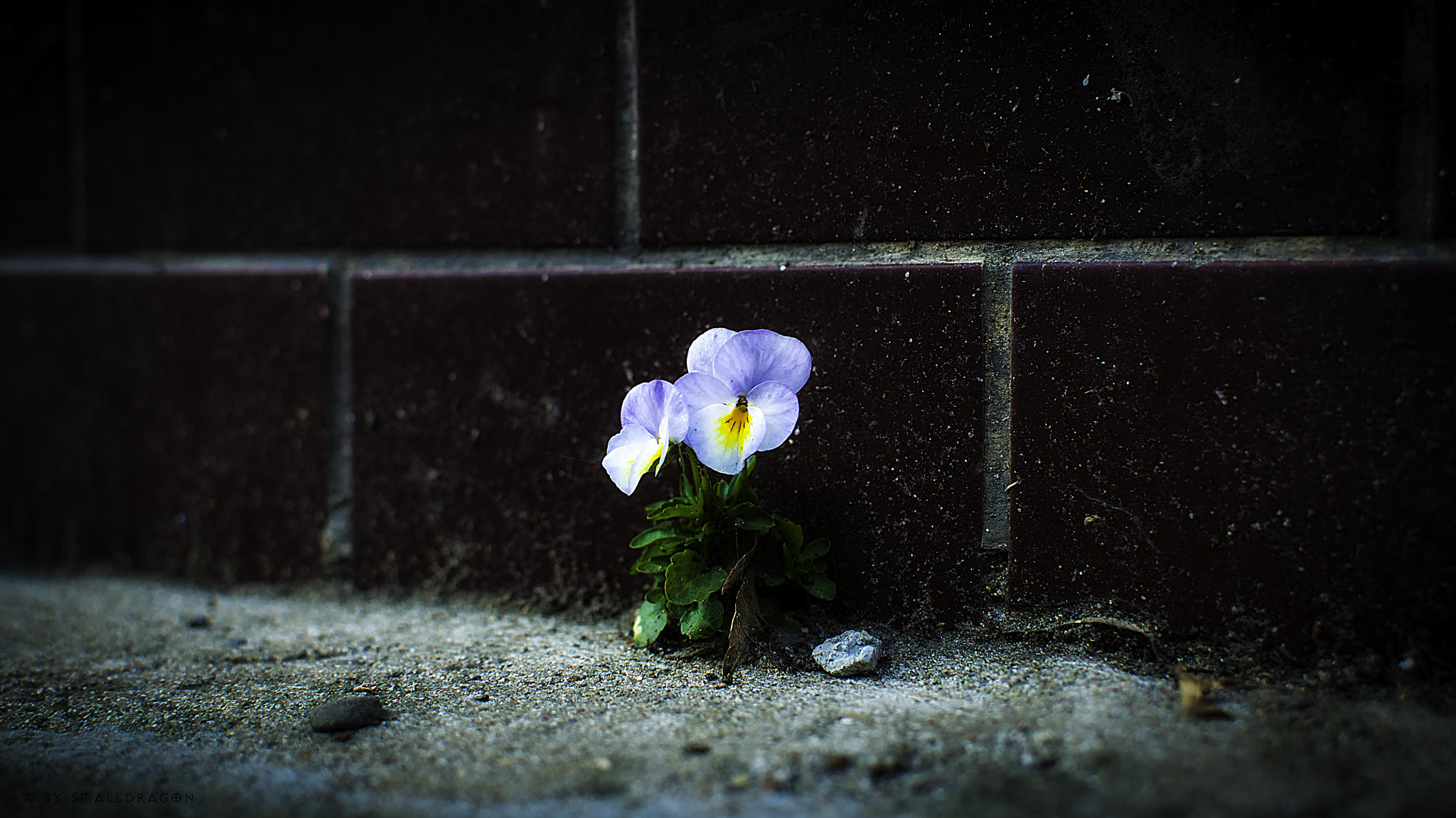 Photograph Flowers on the Wall 03 by Sven Reitis on 500px