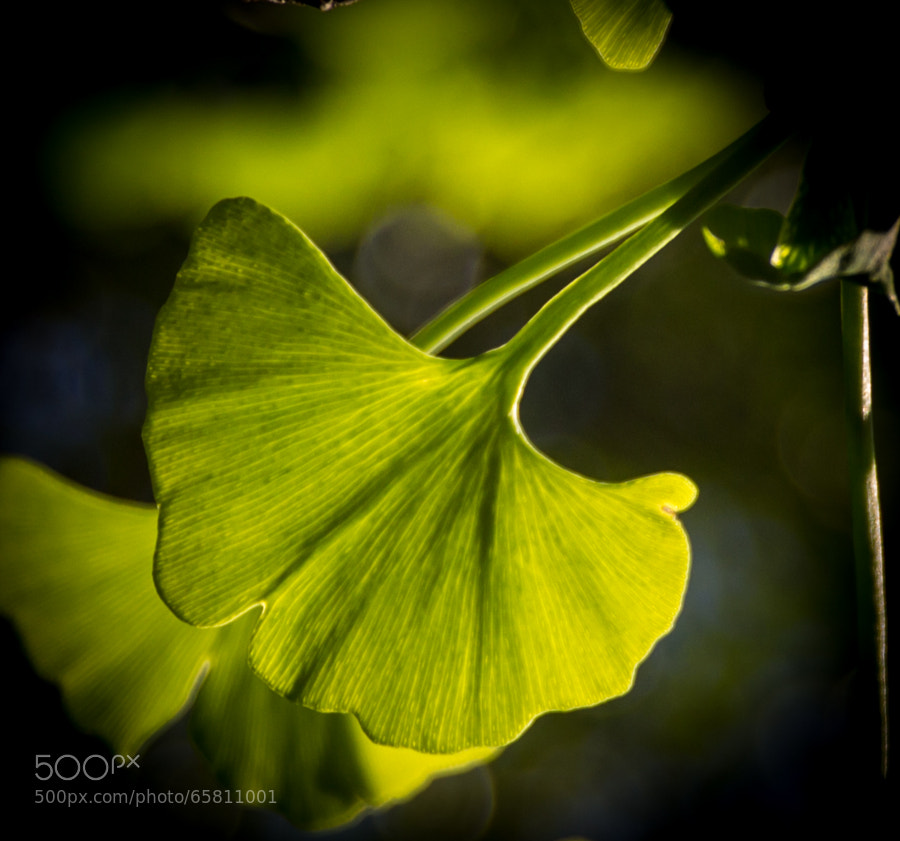 Photograph New Leaf by Aaron Vipperman on 500px