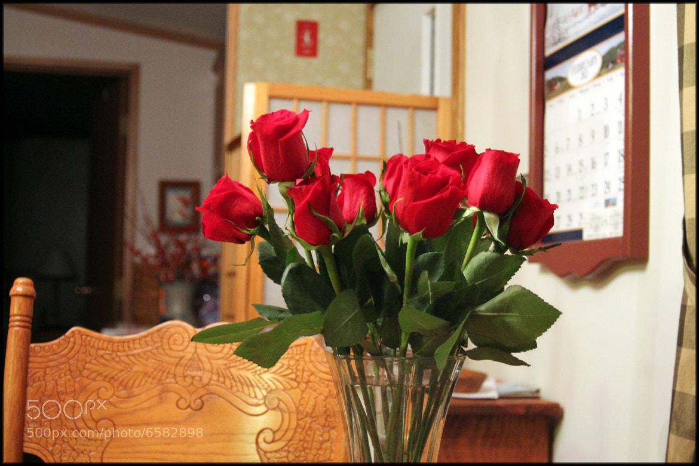 Photograph roses by akira yamauchi on 500px