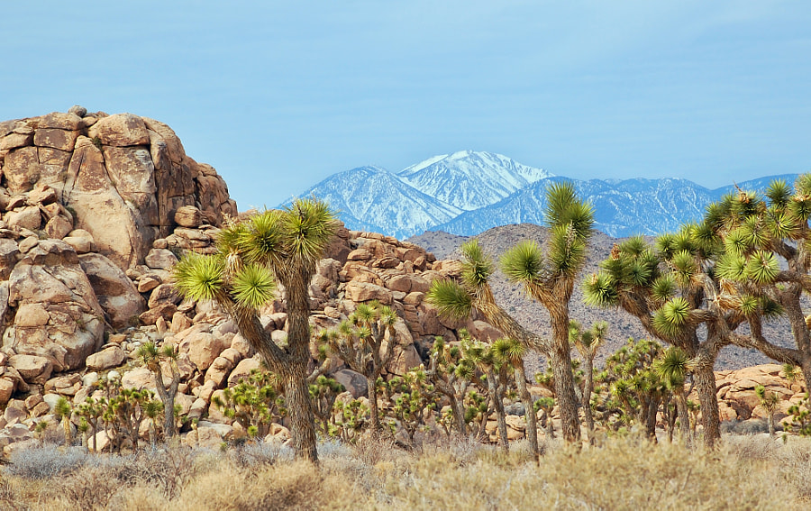 Hot and Cold in Joshua Tree by Phillip James on 500px.com