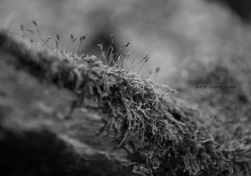 Photograph 22.2.2012 - Think Nature by Jan C. Boersma on 500px