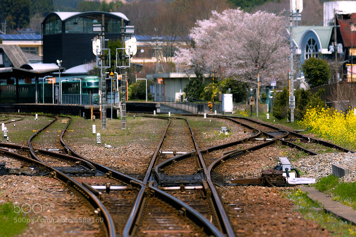 Photograph Switch to Spring by Junya Hasegawa on 500px