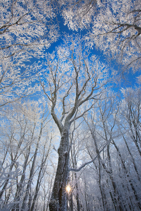 Photograph Winter Spirit by Scott Hotaling on 500px
