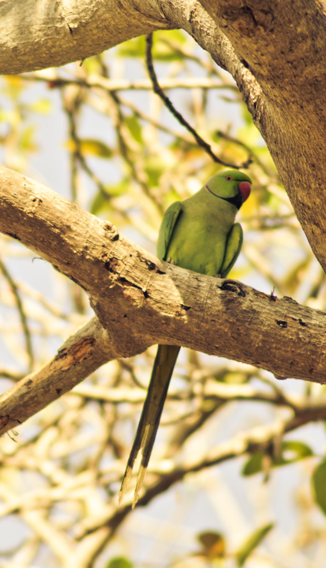 Photograph ~ PaRrOt ~ by King Of EaRtH on 500px
