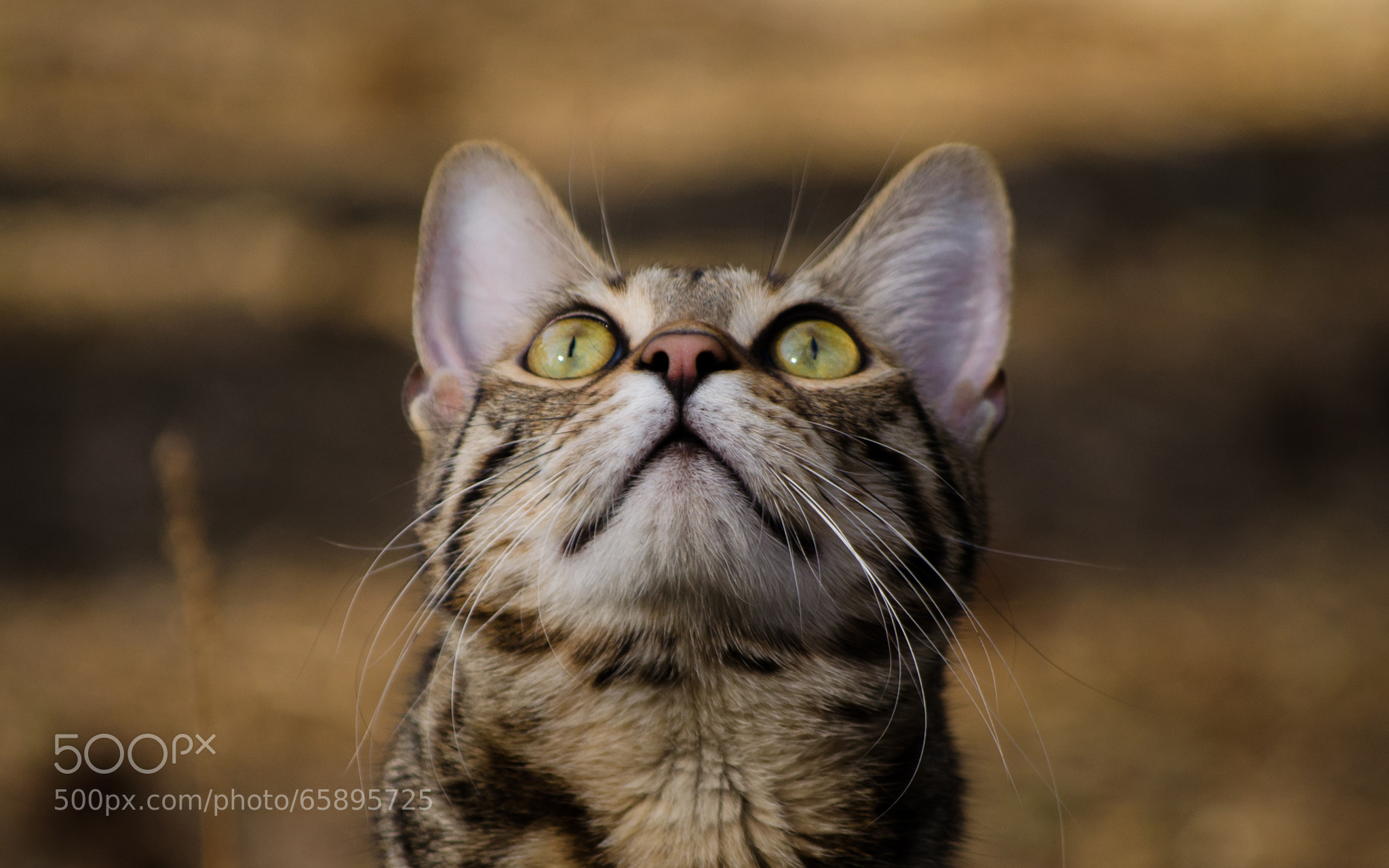 Photograph Things Are Looking Up by Adam Stevens on 500px