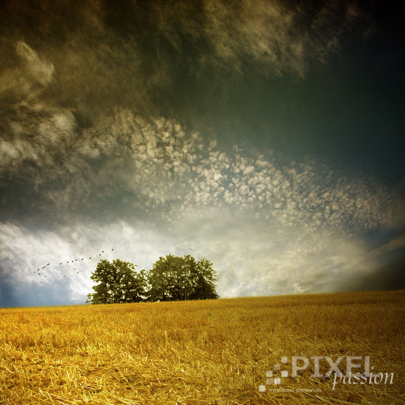 Photograph stubble field by Pixel Passion on 500px