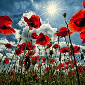 Where flowers meet the sky by Alexander Sidorov (Alexander_Sidorov)) on 500px.com