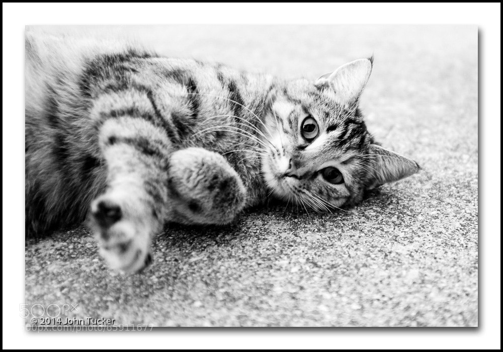 Photograph Tabby Wants to Touch by John Tucker on 500px
