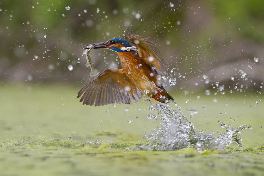Green fishing by Marco Redaelli on 500px.com