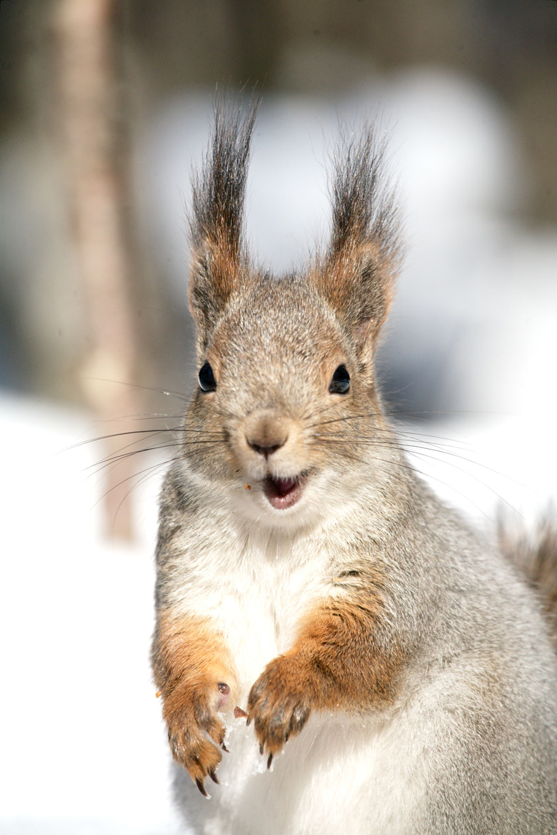 Photograph The Lucky Squirrel by Gleb Skrebets on 500px