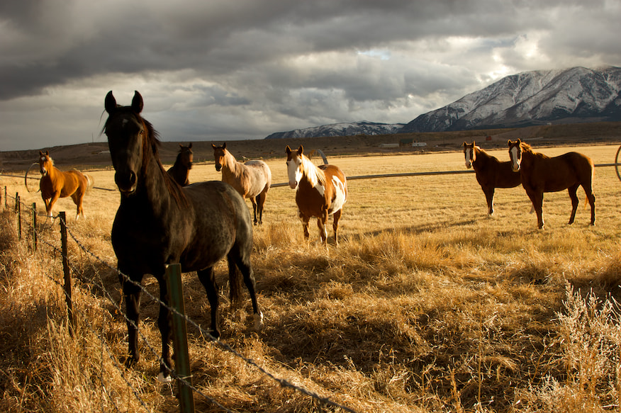 Photograph Stormy Horses by Ben Klaus on 500px