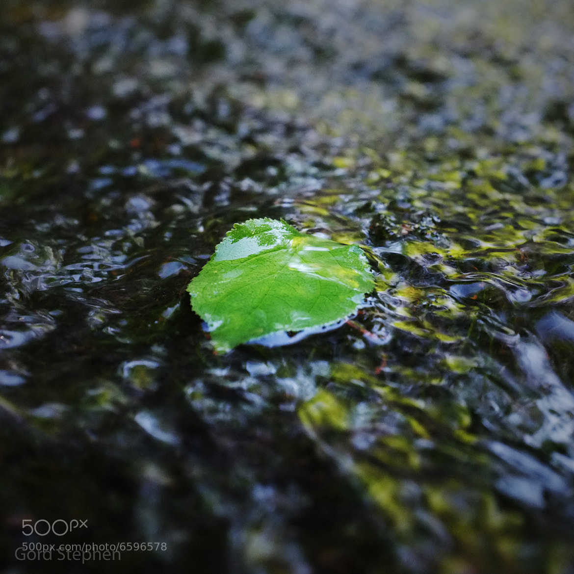 Photograph Stream Leaf by Gord Stephen on 500px