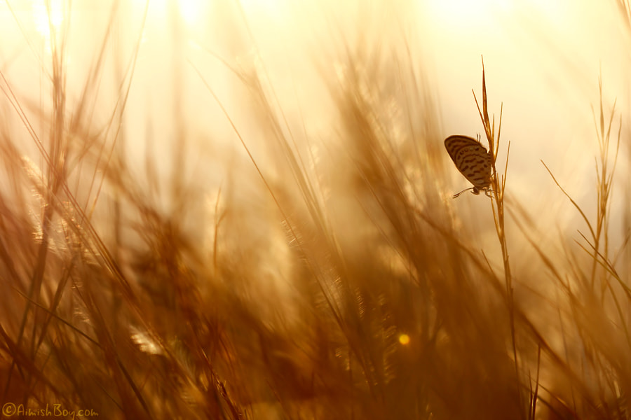 Photograph Golden Brown (blue) by AimishBoy (Nadav Bagim) on 500px
