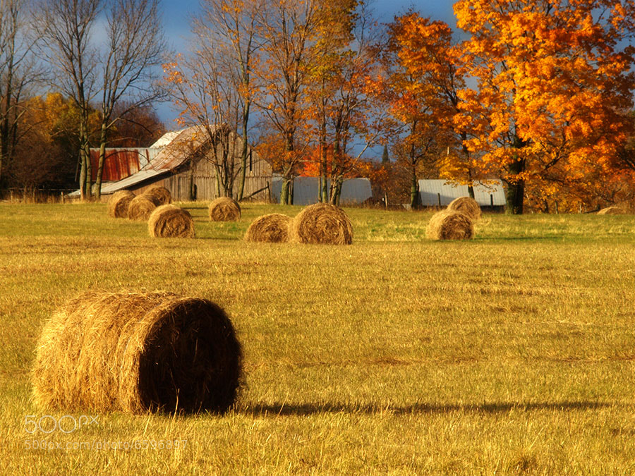 Photograph Autumn's Hay Bales by Peter Baumgarten on 500px
