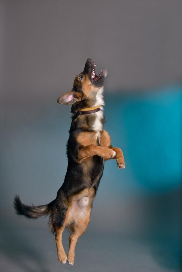 Jump and bark
