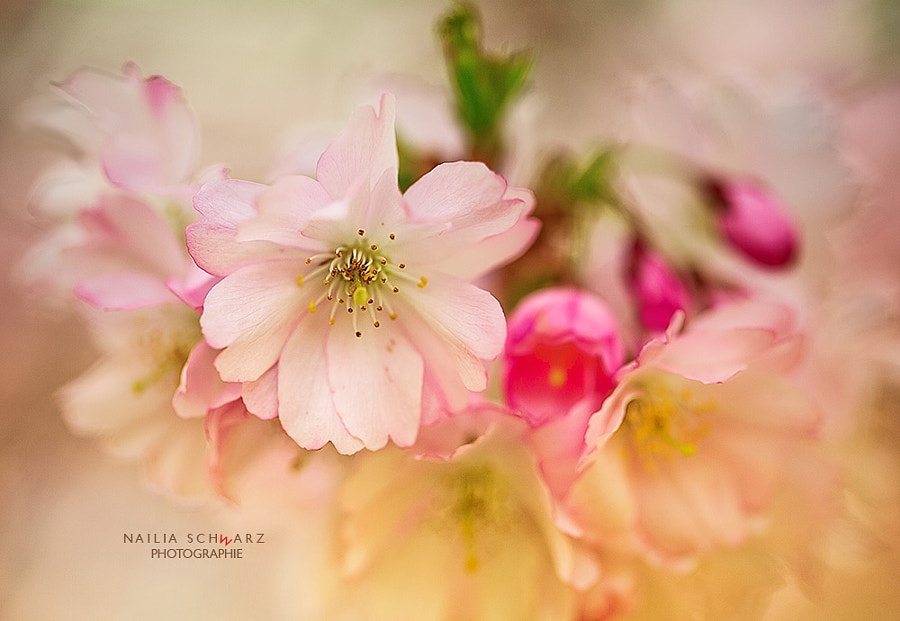 Spring by Nailia Schwarz on 500px.com