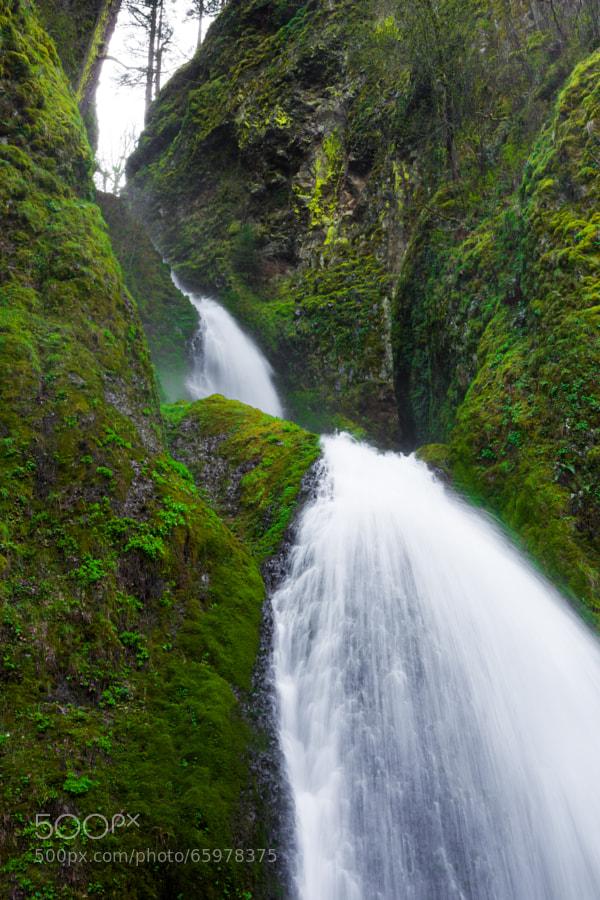 This is along the foot path toward Upper Wahkeena Falls.