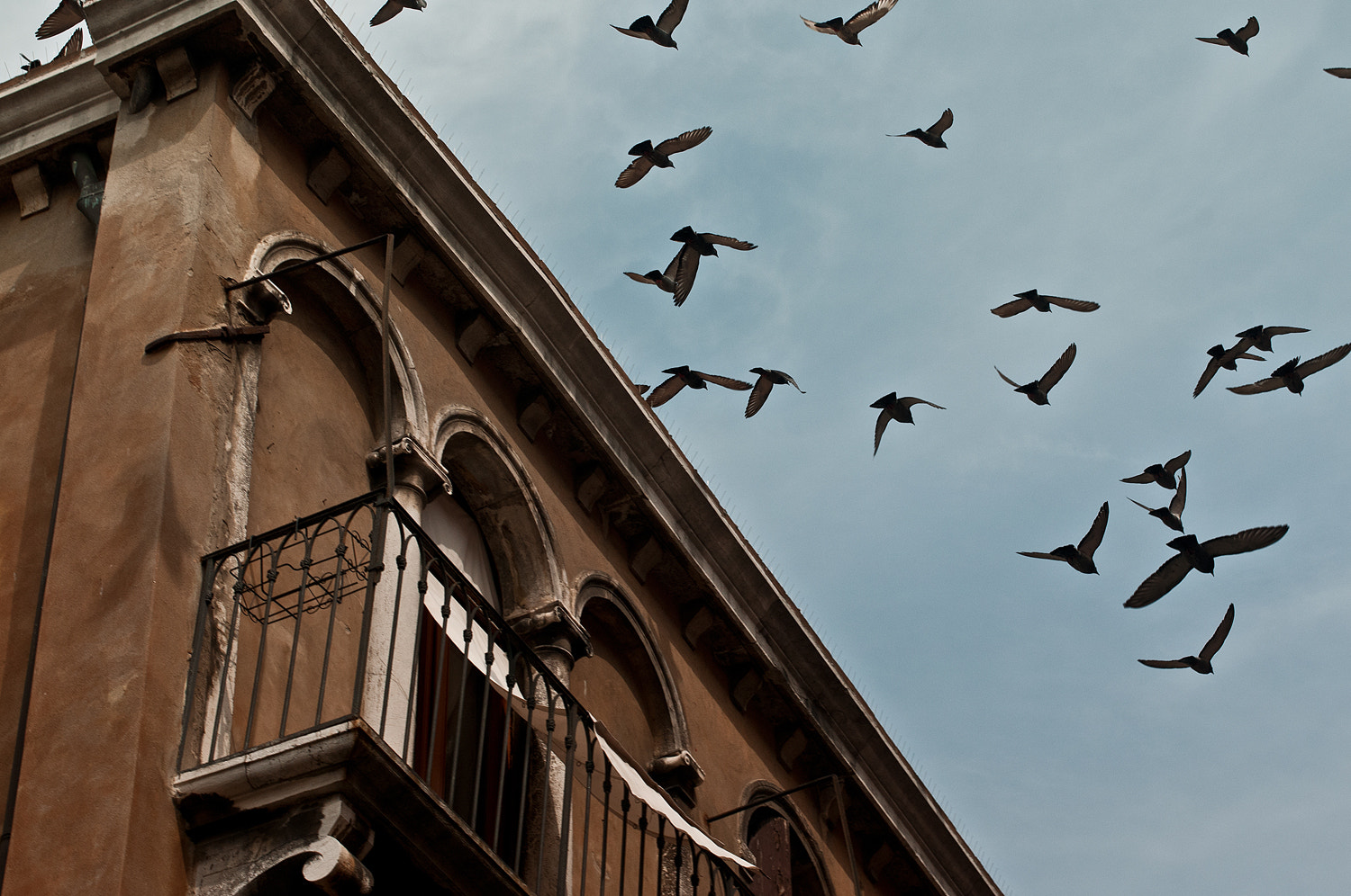 Photograph Fly Away by Raphaël  Melloul on 500px