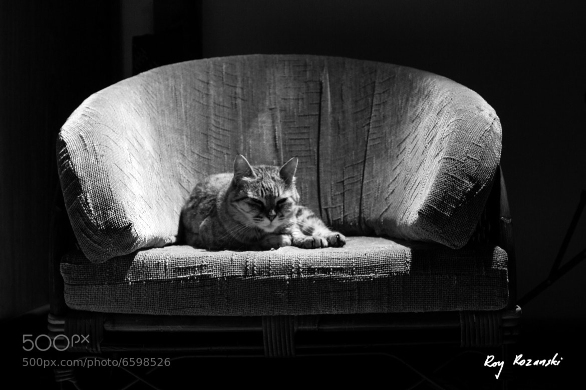 Photograph Cat laying on chair by Roy Rozanski on 500px