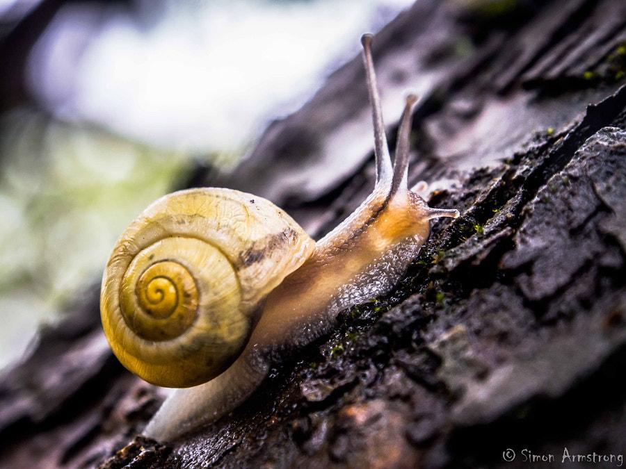 Escargot sous la pluie by Simon Armstrong on 500px.com