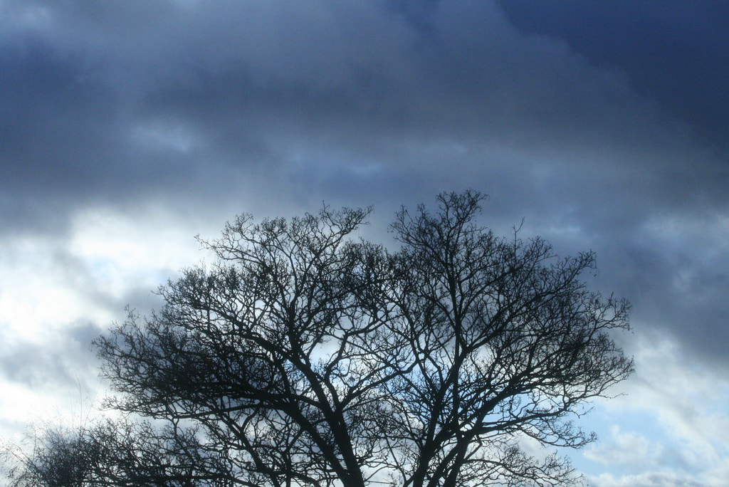 Photograph Clouds Through the Tree of Winter HD - The Time Lapse Guys by The Time Lapse Guys on 500px