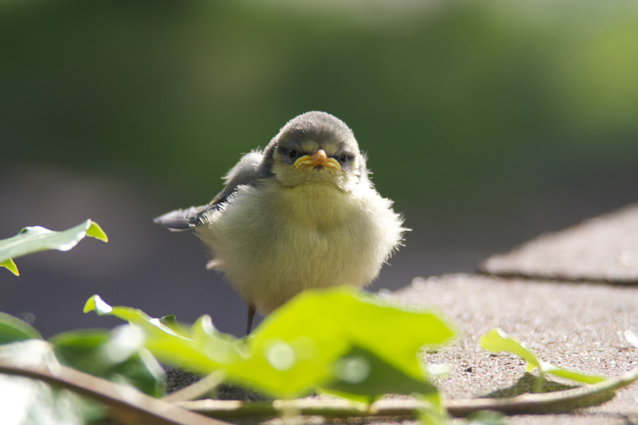 Photograph Grumpy Bird by Christian Twehues on 500px