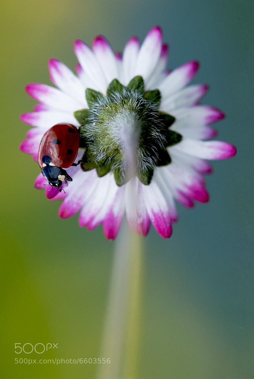 Photograph Cocci-rette by Hornberger David on 500px