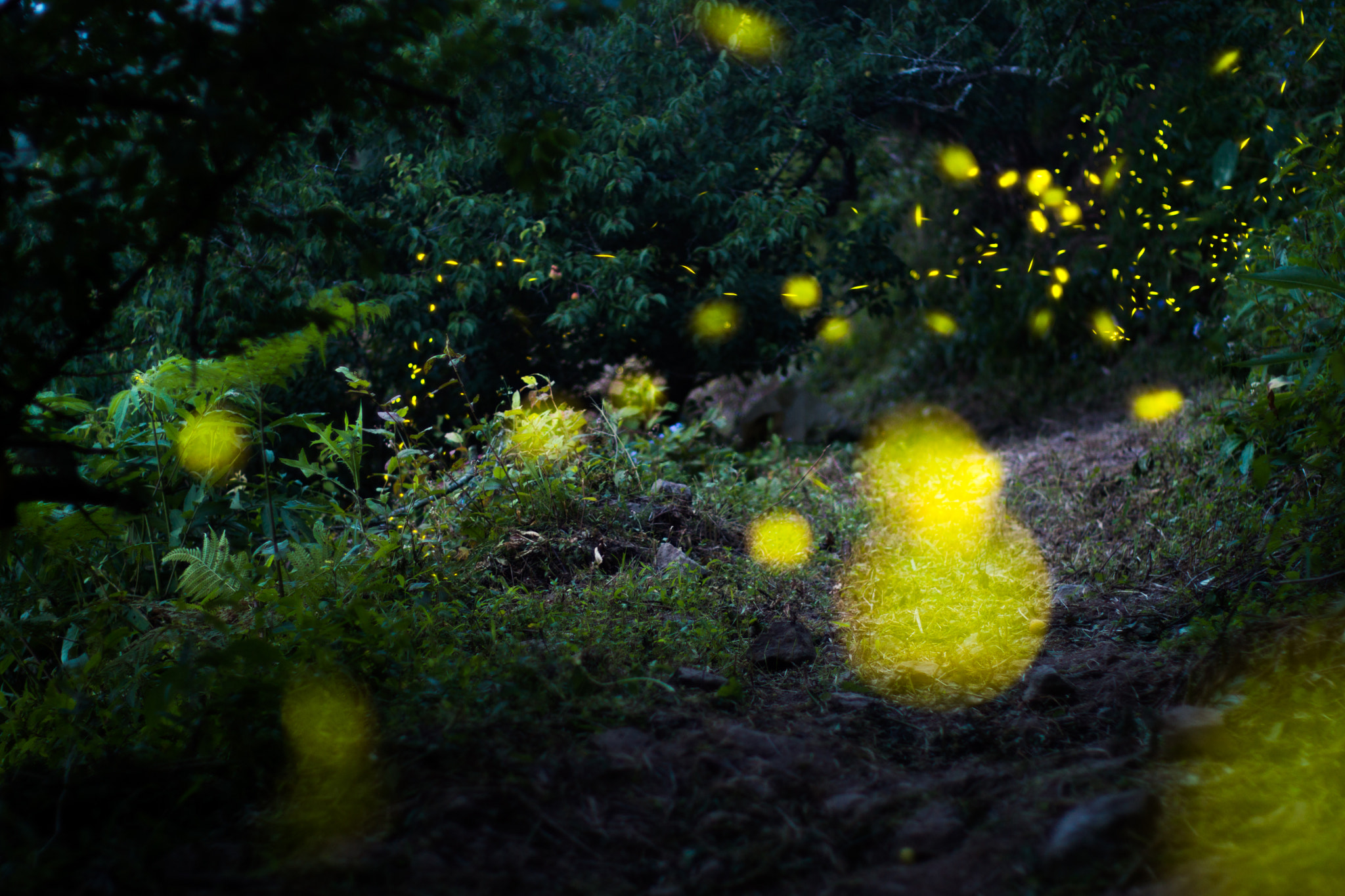 Photograph Firefly by Yu Ren Chang on 500px
