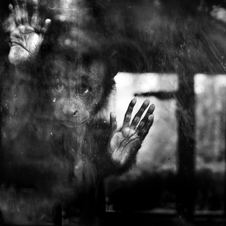 Photograph behind the glass by Sandra Štimac on 500px