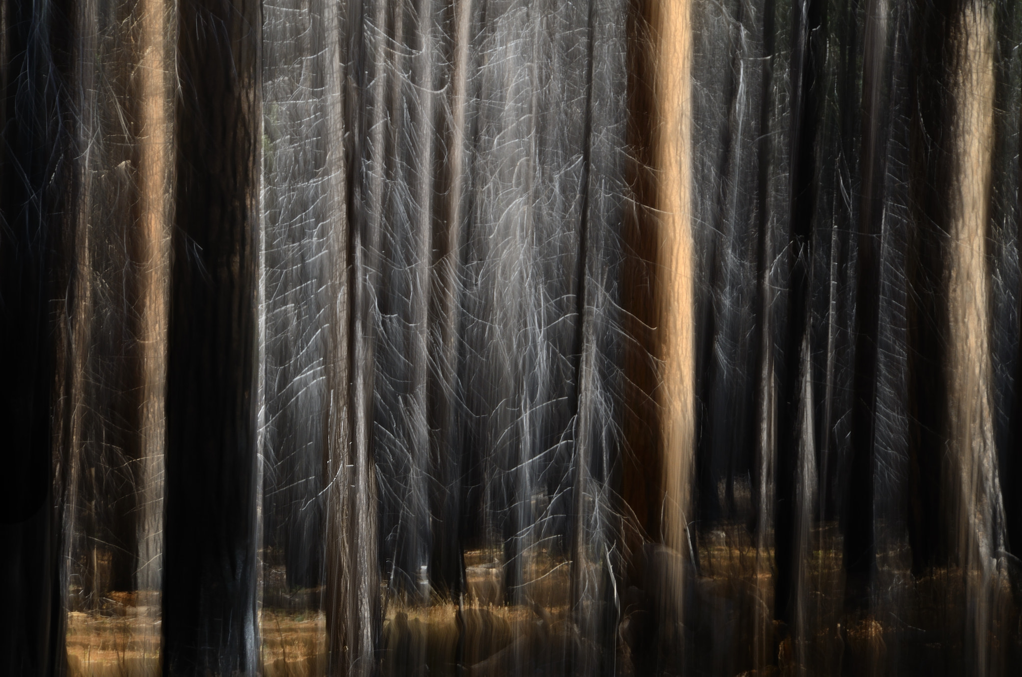 Photograph Bare Trees by Rich Greene on 500px