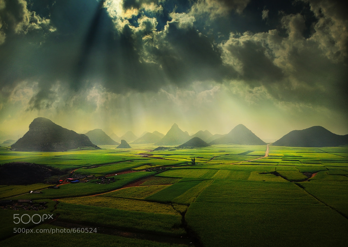 Photograph The canola fields by Weerapong Chaipuck on 500px