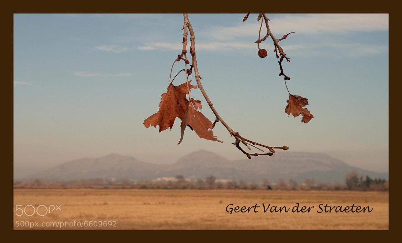 Photograph Pals by Geert Van der Straeten on 500px