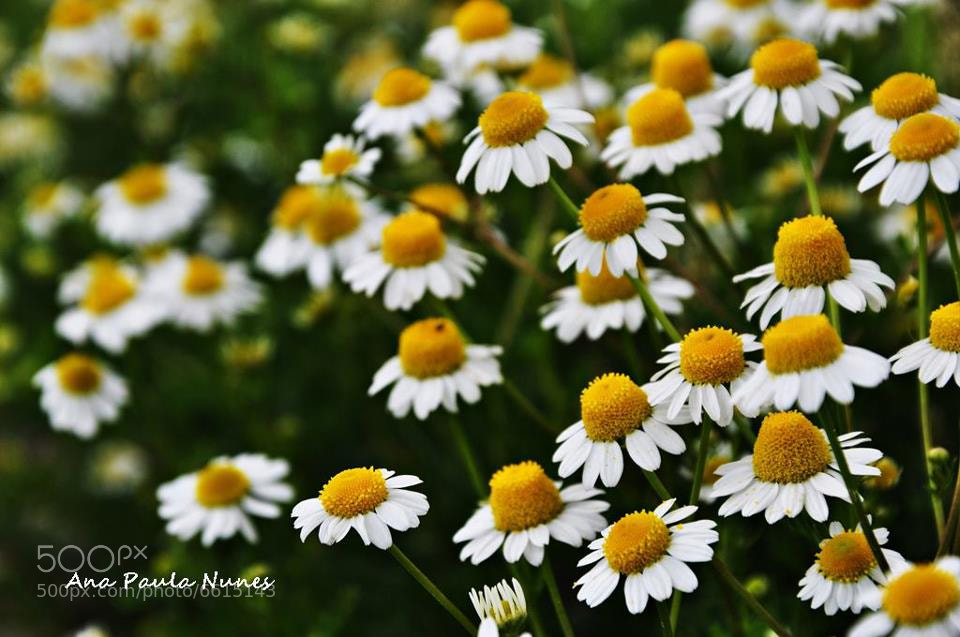 Photograph Spring by Anita  Nunes on 500px