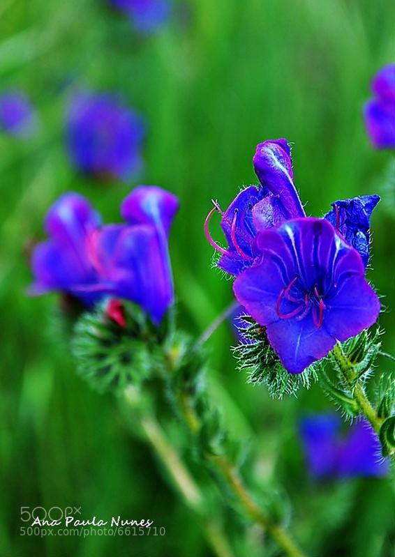Photograph Blue by Anita  Nunes on 500px