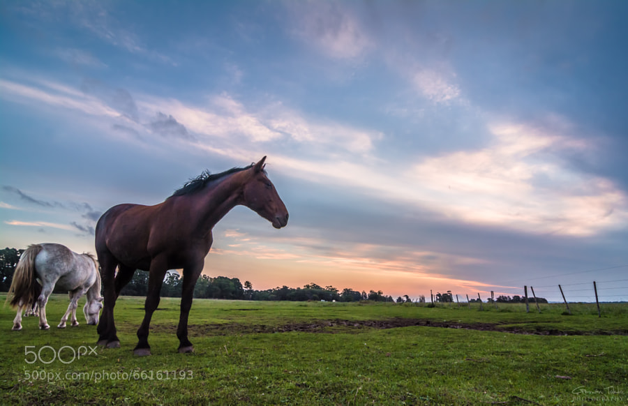 Contemplation horse at sunset