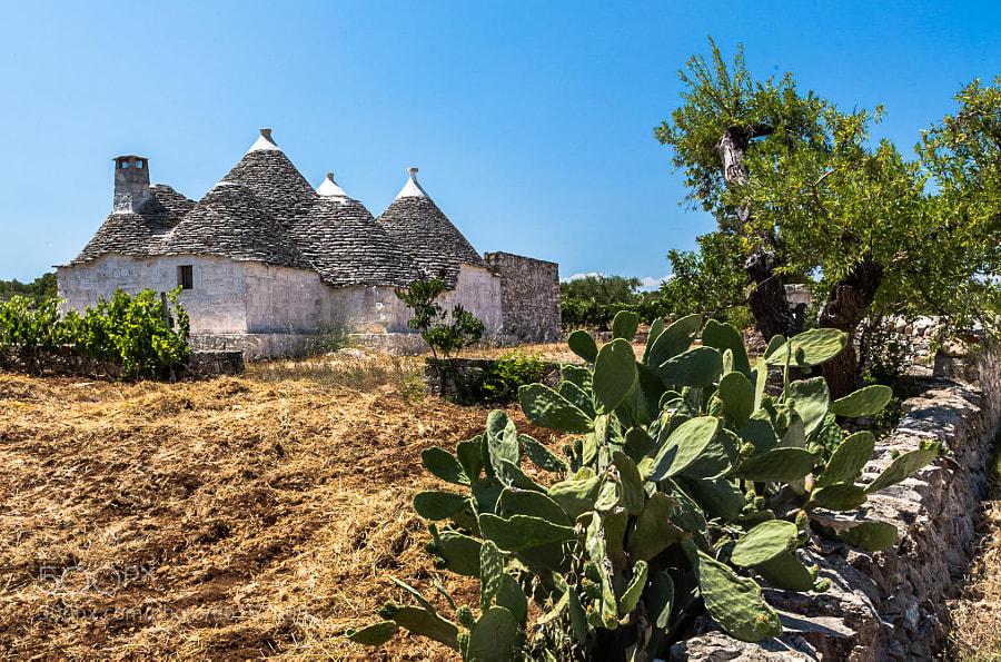 Trulli in the countryside, Alberobello, Apulia