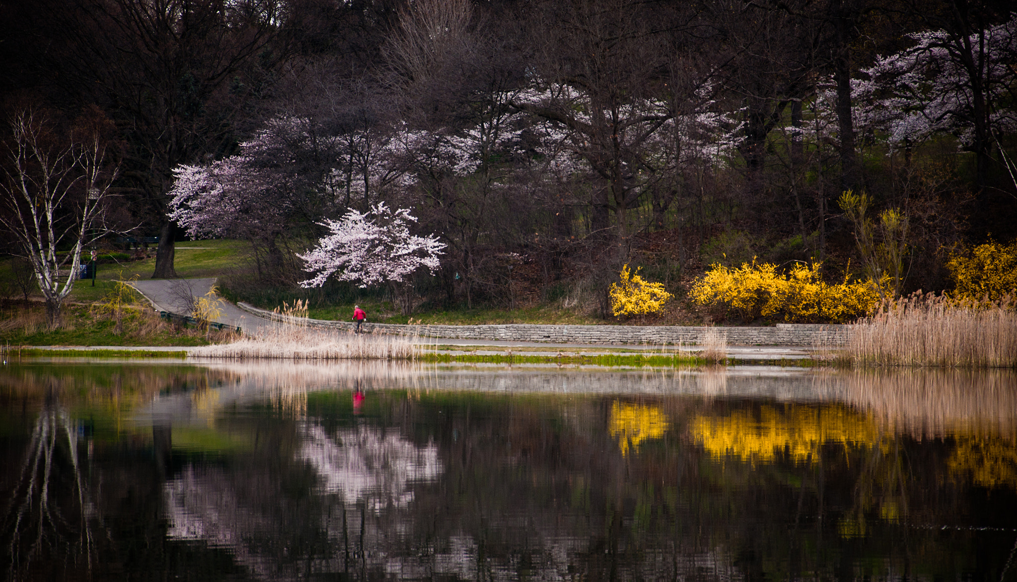 Photograph Sakura Hanami by Jeff Smith on 500px
