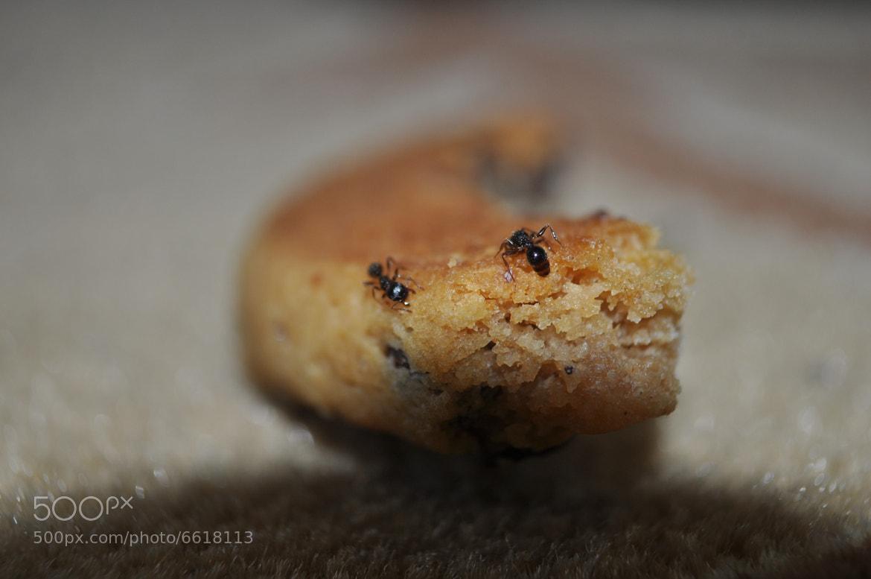 Photograph ants by Omer Faruk Kara on 500px