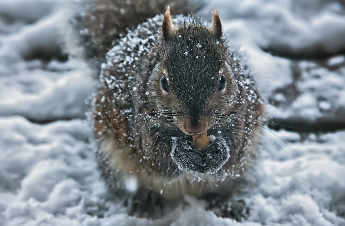 Photograph Squirrel! by Julian C. on 500px