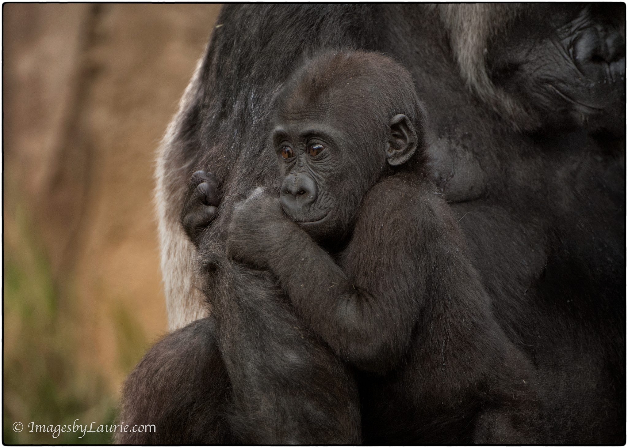 Photograph A Little Insecure by Laurie Rubin on 500px