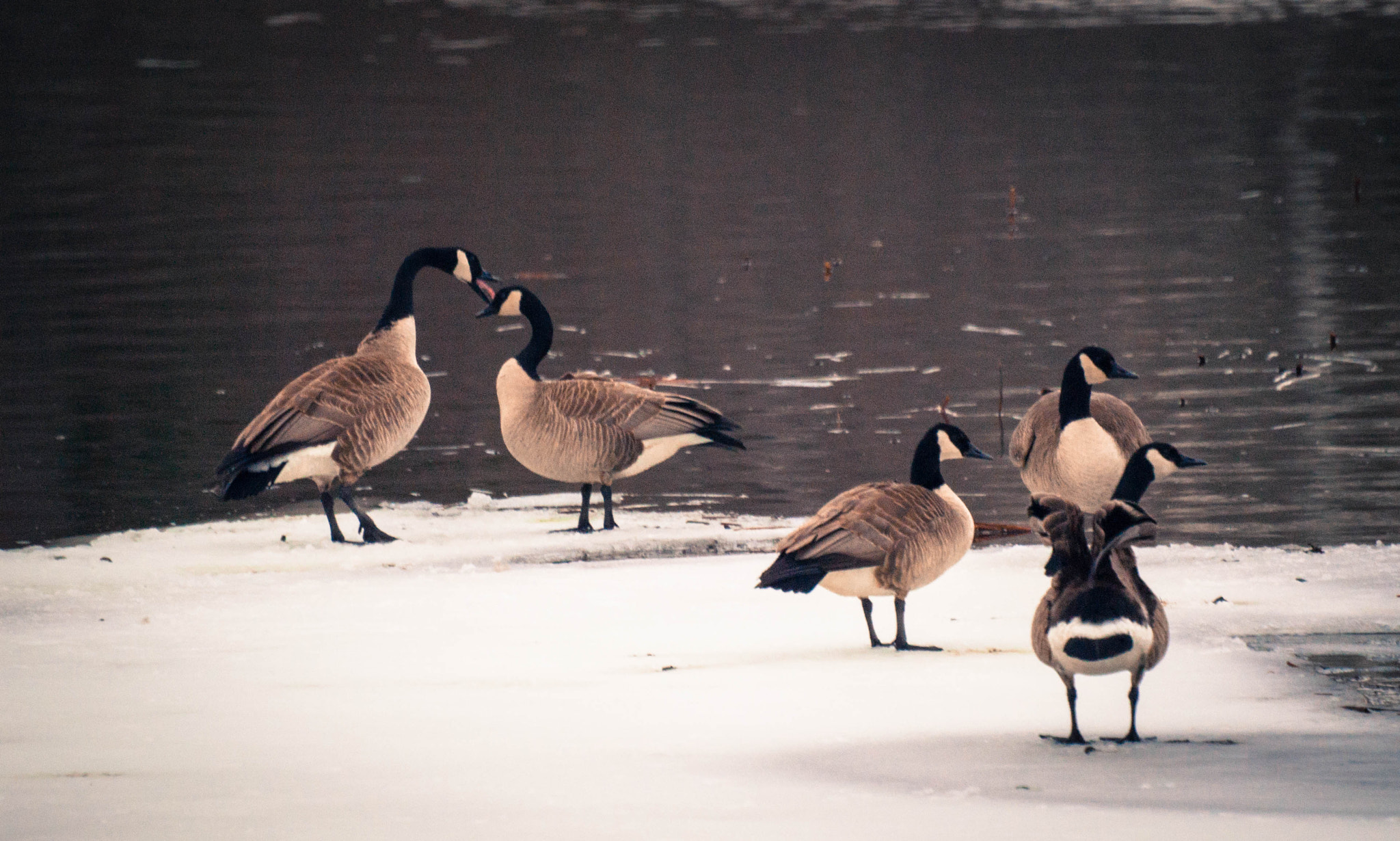 Photograph Honking by Jackie Hartleben on 500px