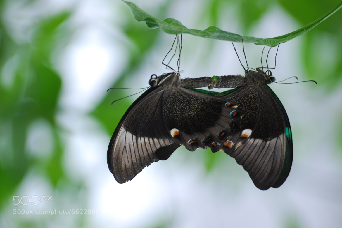 Photograph Butterflies by Peter Drogt Fotografie on 500px
