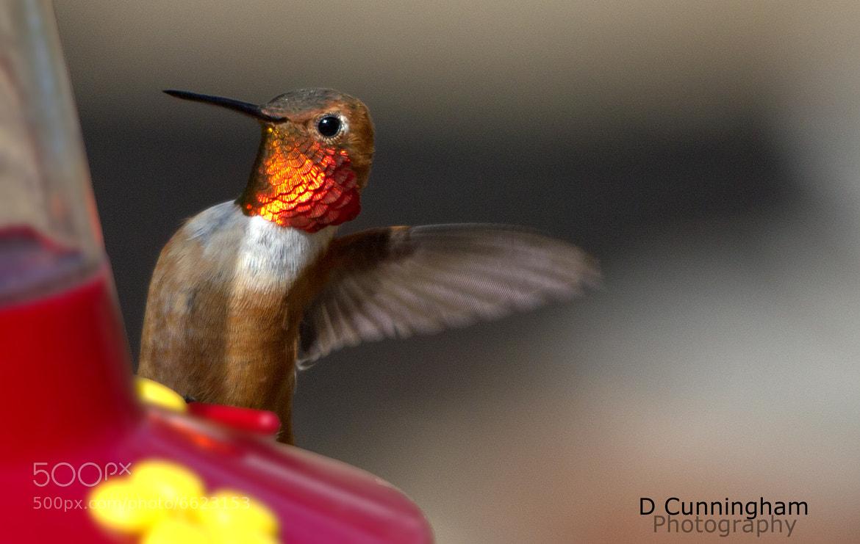Photograph Hummingbird's Vist by Dorothy Cunningham on 500px