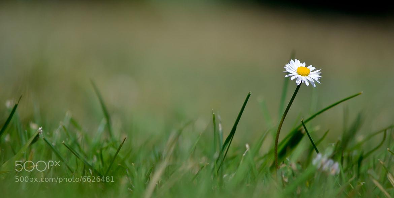 Photograph Sola en el  campo by Inaciu Naves on 500px
