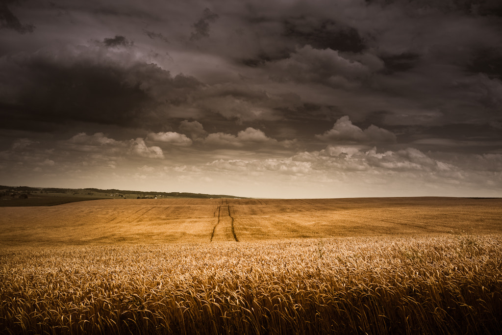 Photograph Spacious Skies and Amber Waves by Loren Zemlicka on 500px