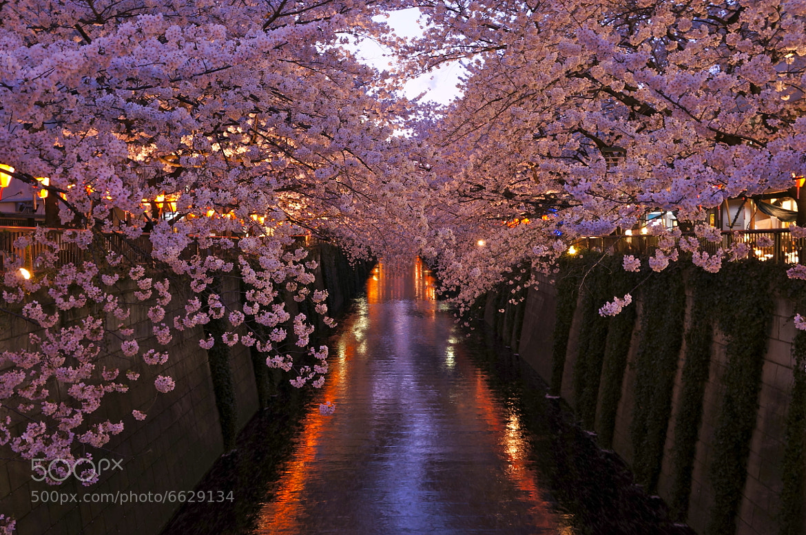 Photograph spring time by shuso itaoka on 500px