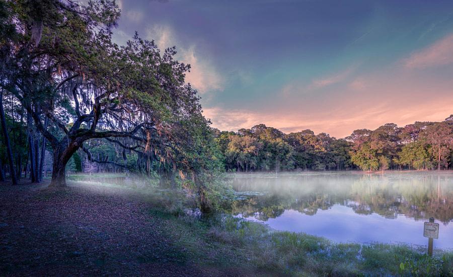 chestnut park tarpon spring Park mist